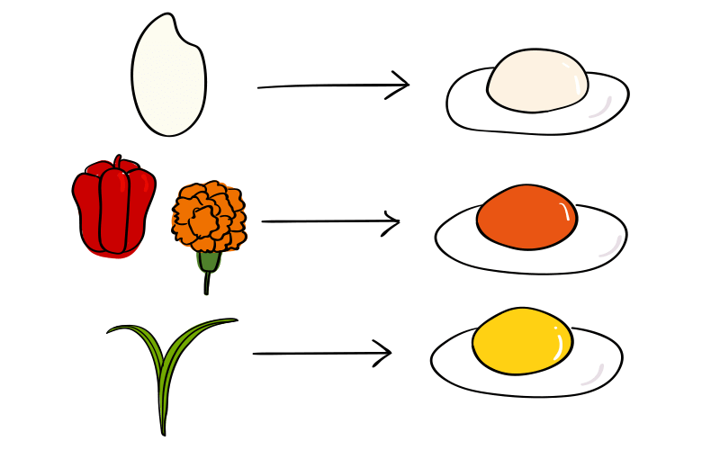 卵の色は食べたもので決まります