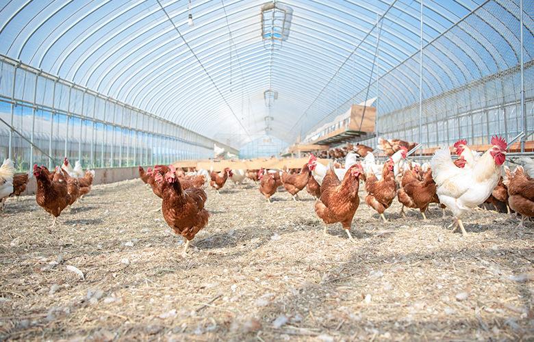 鶏も人も気持ちいい農園